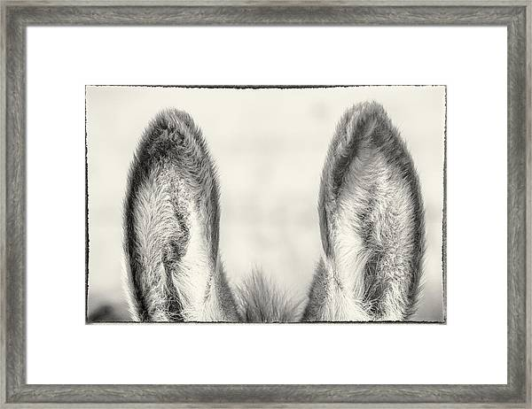 Those Ears Framed Print