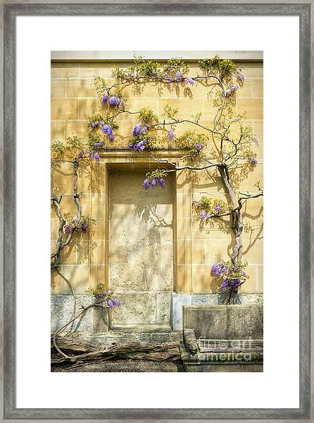 Threads Of Wisteria Framed Print