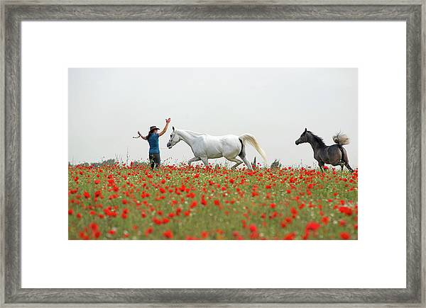 Three At The Poppies' Field Framed Print