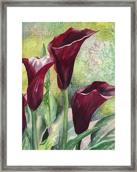 Three Callas Framed Print