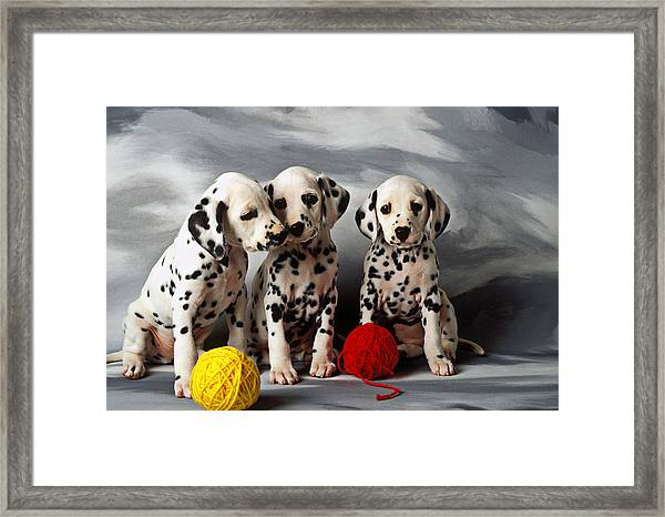 Three Dalmatian Puppies  Framed Print