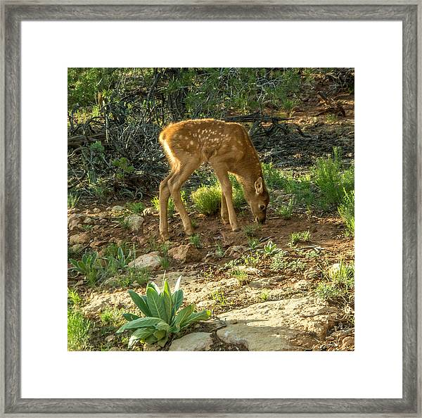 Framed Print featuring the photograph Three Day Old Fawn by Claudia Abbott