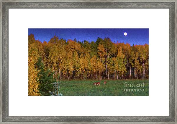 Three Deer And A Moon Framed Print