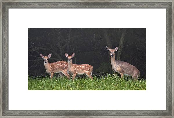 Three Does Framed Print