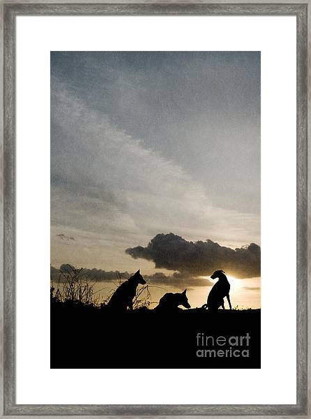Three Dogs At Sunset Framed Print