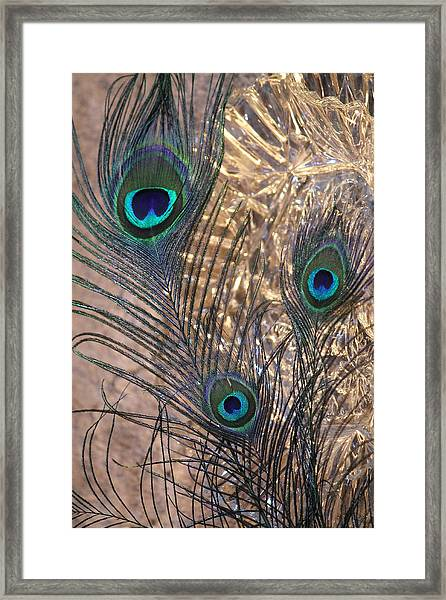 Three Feathers Framed Print