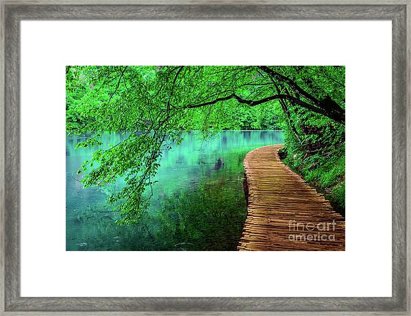 Tree Hanging Over Turquoise Lakes, Plitvice Lakes National Park, Croatia Framed Print