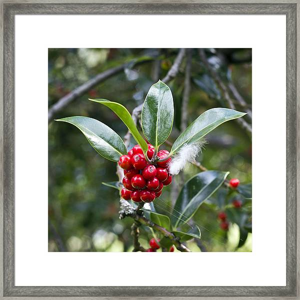 Three Happy Leaves Among Red Berries Framed Print