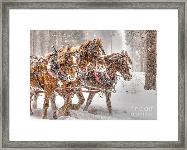 Three Horses - Color Framed Print