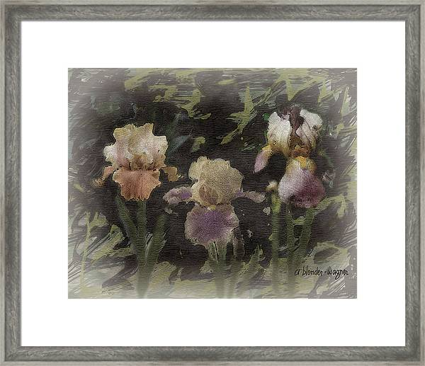 Three Iris Framed Print