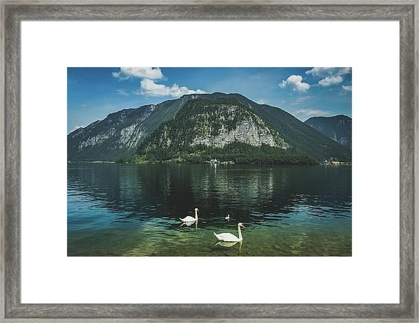 Three Lake Hallstatt Swans Framed Print