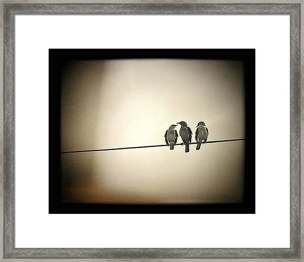 Three Little Birds Framed Print