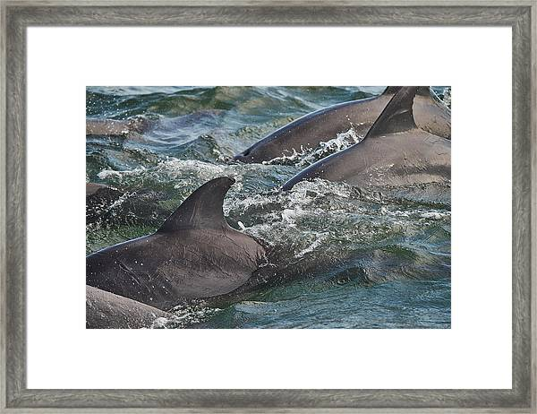 Three Peas In A Pod - Color Framed Print