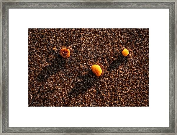 Three Pebbles  Framed Print