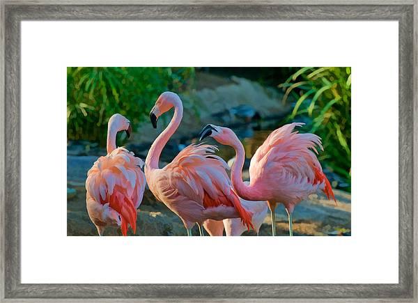 Three Pink Flamingos Strutting Their Stuff Framed Print
