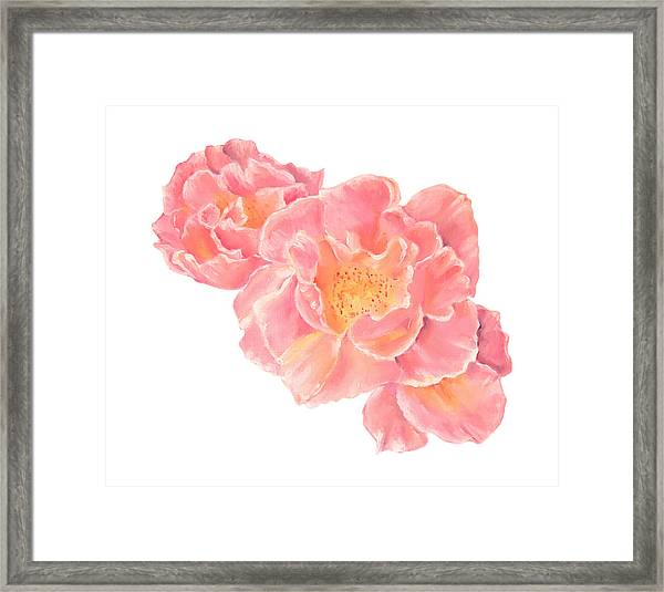 Three Pink Roses Framed Print