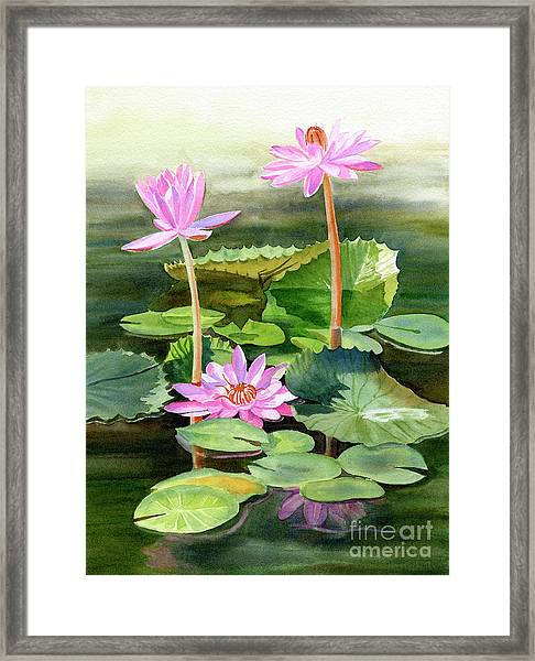 Three Pink Water Lilies With Pads Framed Print