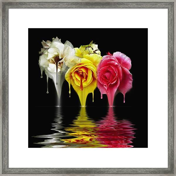 Tears Of Roses Framed Print