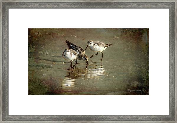 Three Together Framed Print