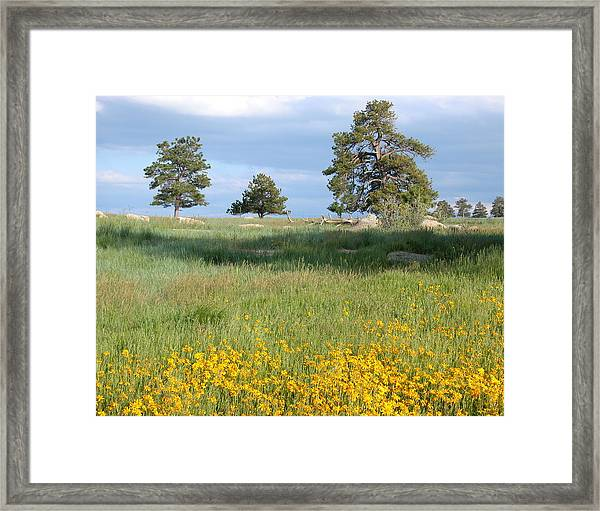 Framed Print featuring the photograph Three Trees by Joseph R Luciano