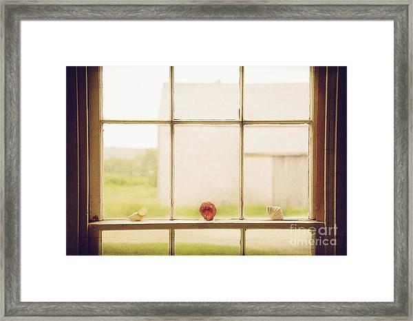 Three Window Shells Framed Print