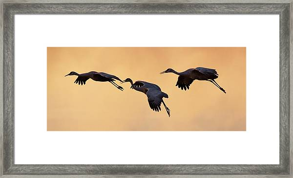 Framed Print featuring the pyrography Three's Comapany by Michael Lucarelli