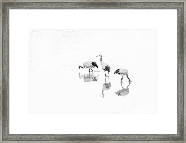 Threesome. Framed Print