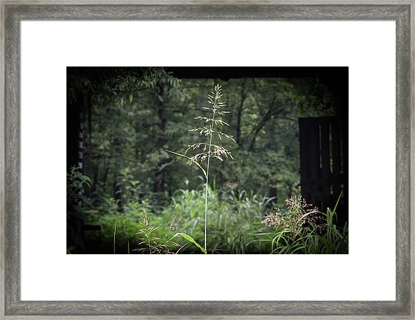 Through The Barn Framed Print