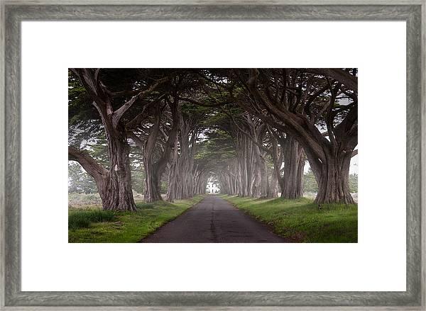 Through The Cypress Framed Print