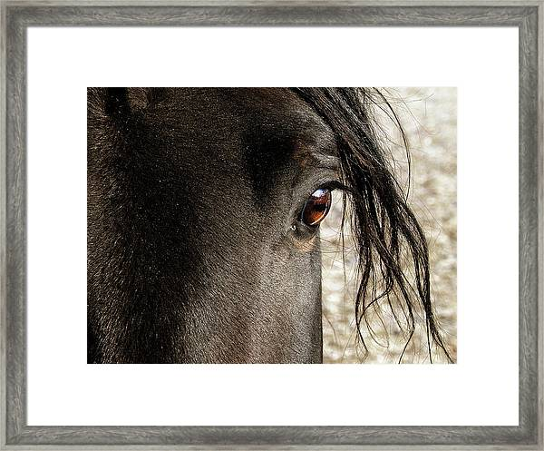 Through The Eye Of A Stallion Framed Print