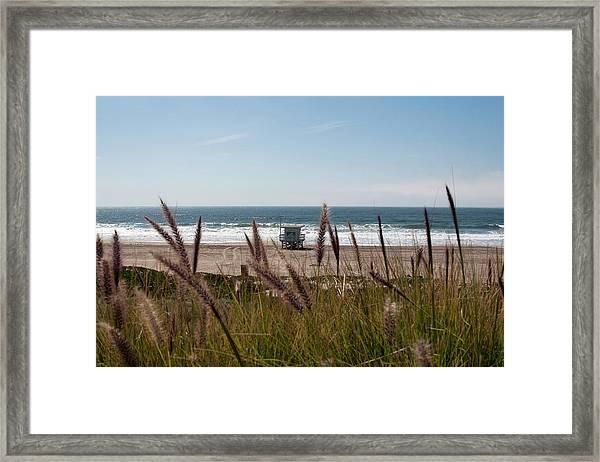 Through The Reeds Framed Print