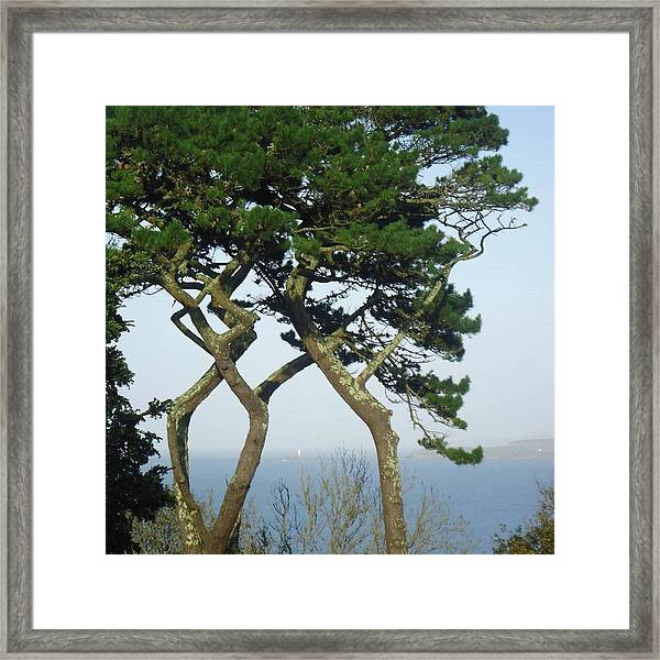Through The Trees To Godrevy From St. Ives Framed Print