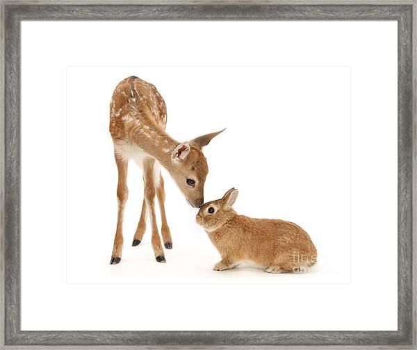 Thumper And Bambi Framed Print