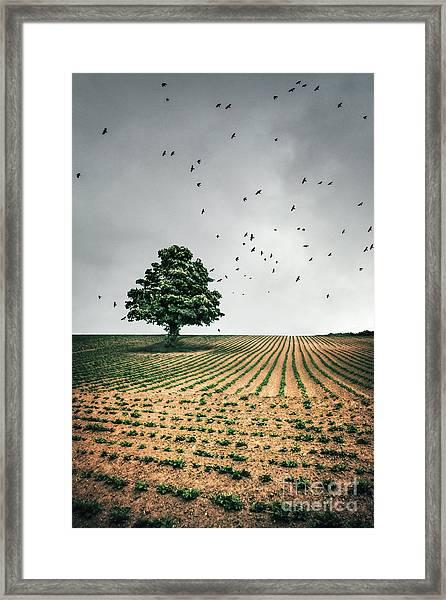 Thunder Arising Framed Print