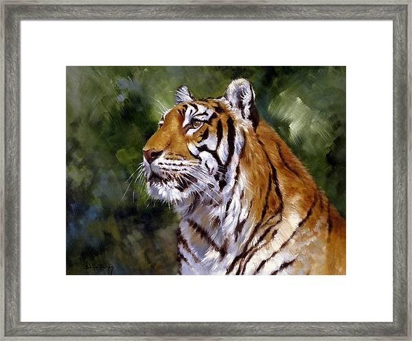 Tiger Alert Framed Print by Silvia  Duran