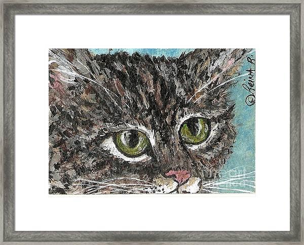Tiger Cat Framed Print