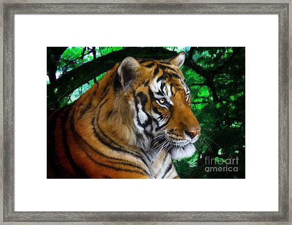 Tiger Contemplation Framed Print