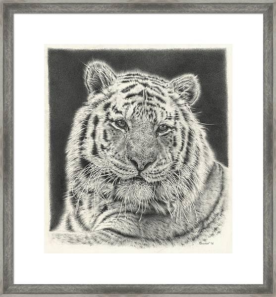 Tiger Drawing Framed Print