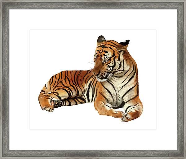 Tiger In Repose Framed Print