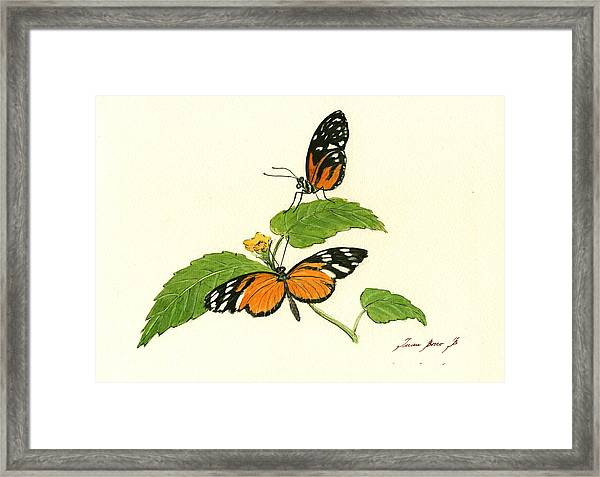 Tiger Longwing Heliconian Framed Print