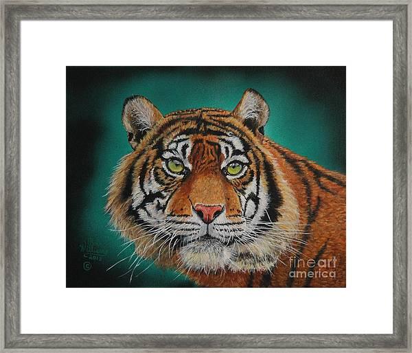 Tiger Portrait......amur Tiger Framed Print
