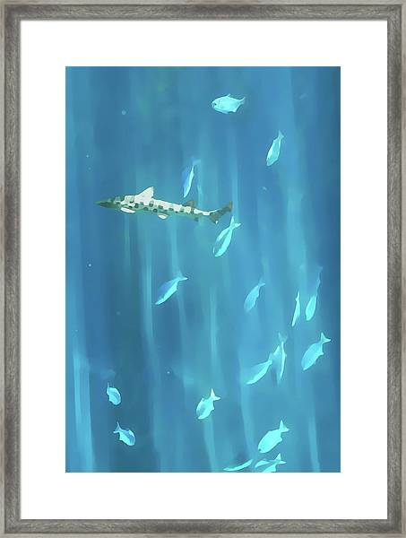 Tiger Shark Framed Print
