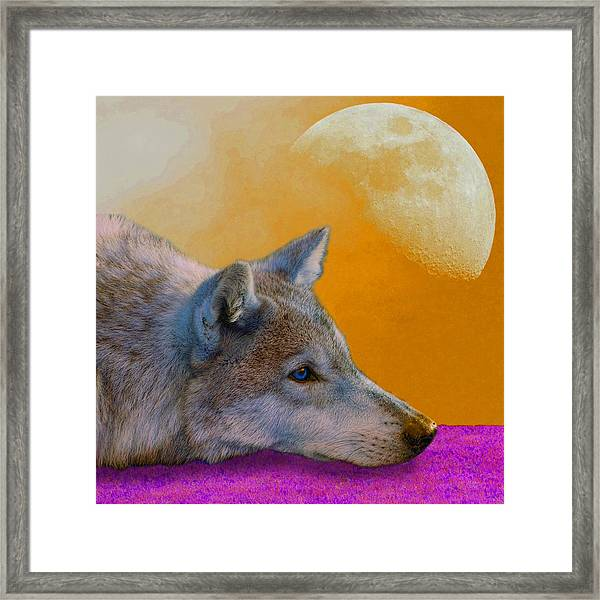 Timber Wolf Under The Moon Framed Print