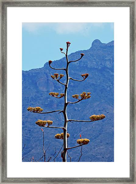 Time To Bloom Framed Print