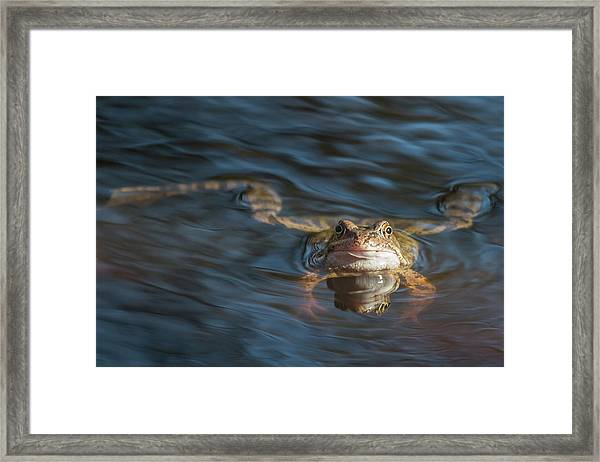 Timeout From The Annual Frog Ball Framed Print