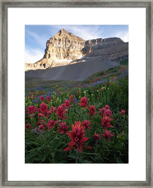 Timpanogos Paintbrush Framed Print