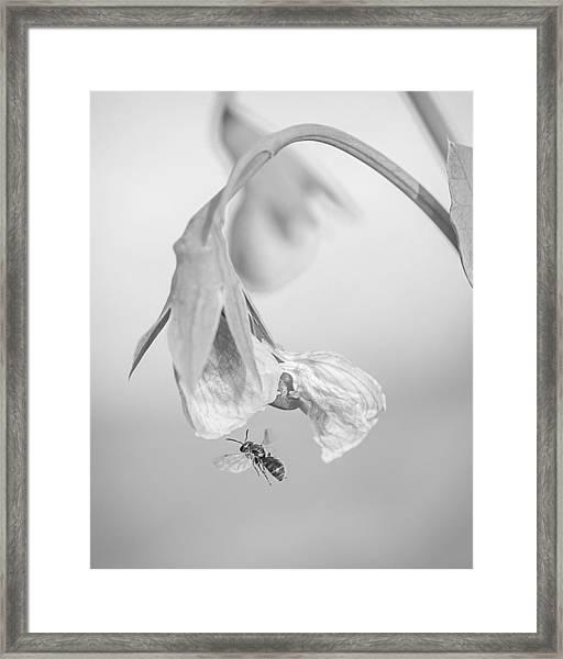 Tiny Bee Around Tiny Pea Framed Print