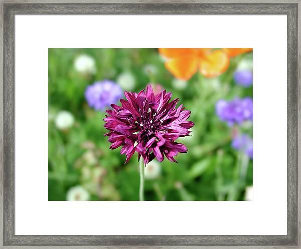 Tiny Flower Framed Print