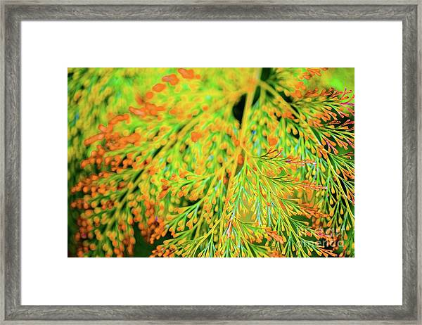 Tiny Flowers Blooming  Framed Print