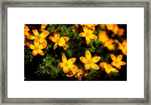 Tiny Suns Framed Print